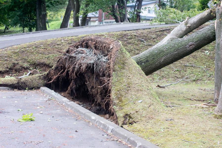 台風直後の倒木