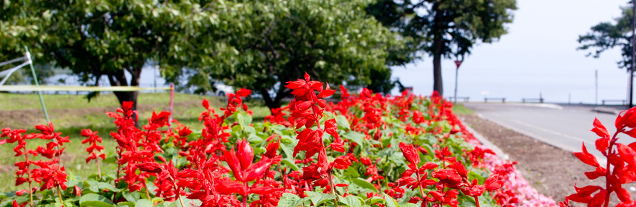 北海道洞爺湖畔の花壇