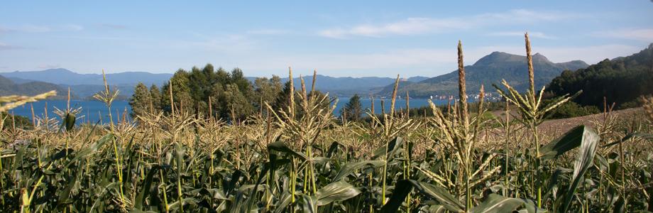 洞爺湖ととうきび畑、野菜