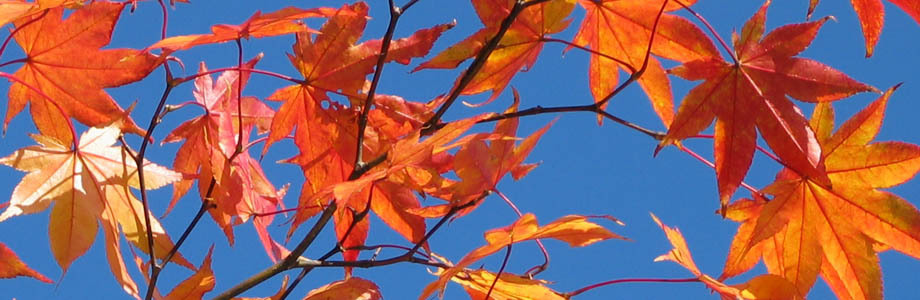 紅葉、秋、紅葉