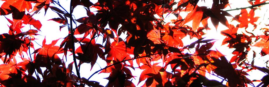 秋の木漏れ日、秋、紅葉
